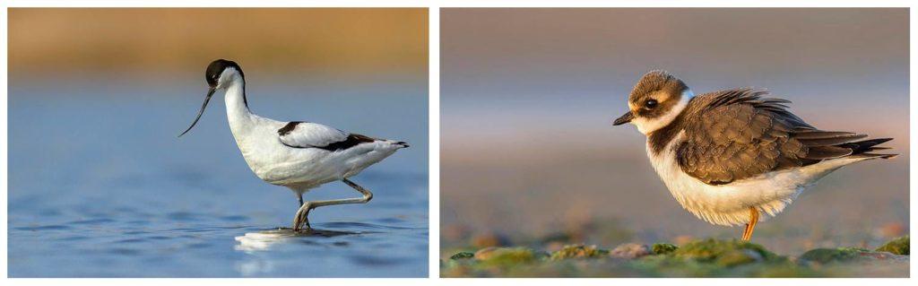 Como fotografar aves pássaros - Fotografia Dicas